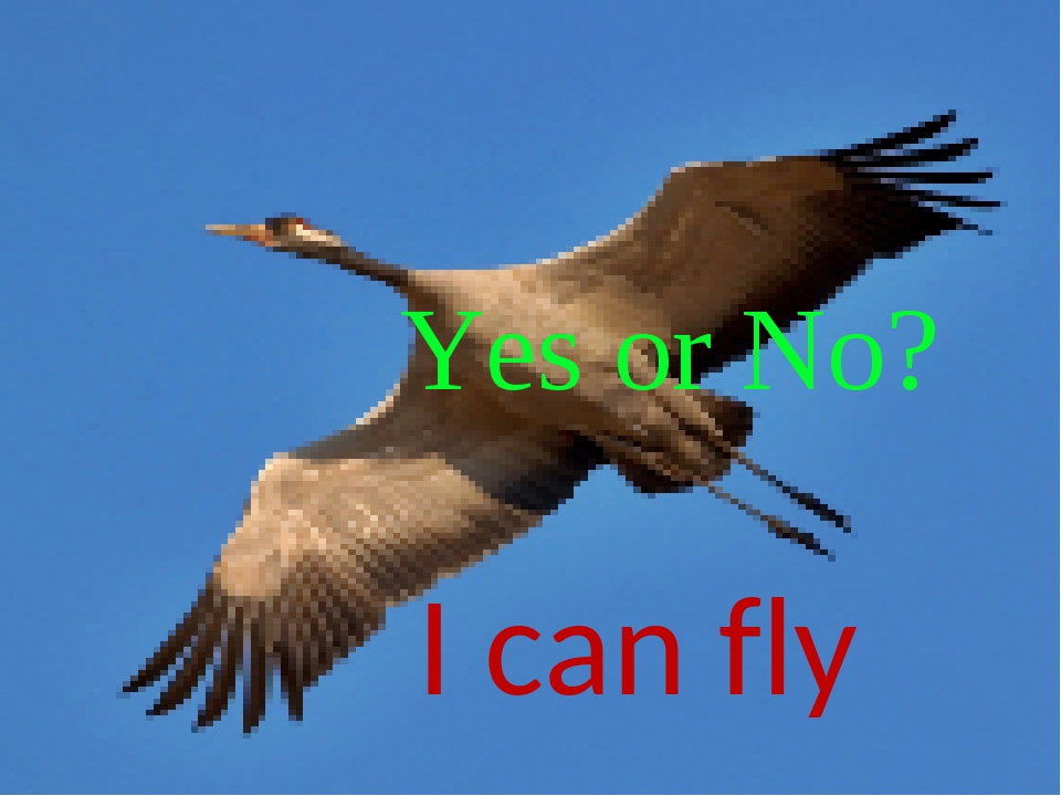 I can fly Yes or No?