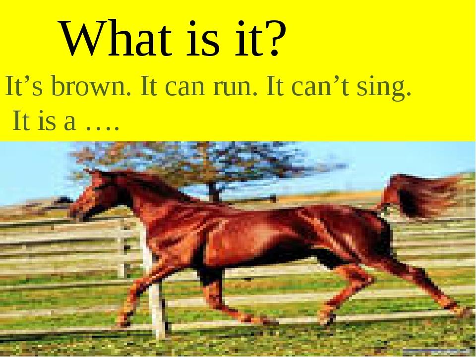 What is it? It's brown. It can run. It can't sing. It is a ….