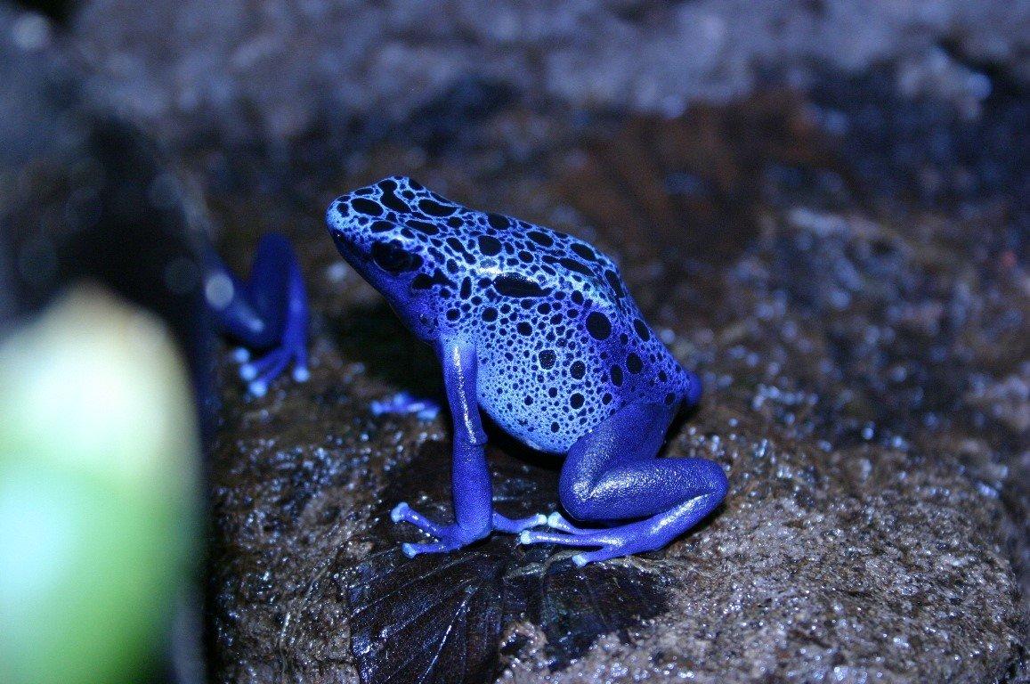 время картинки голубых лягушек ротвейлер