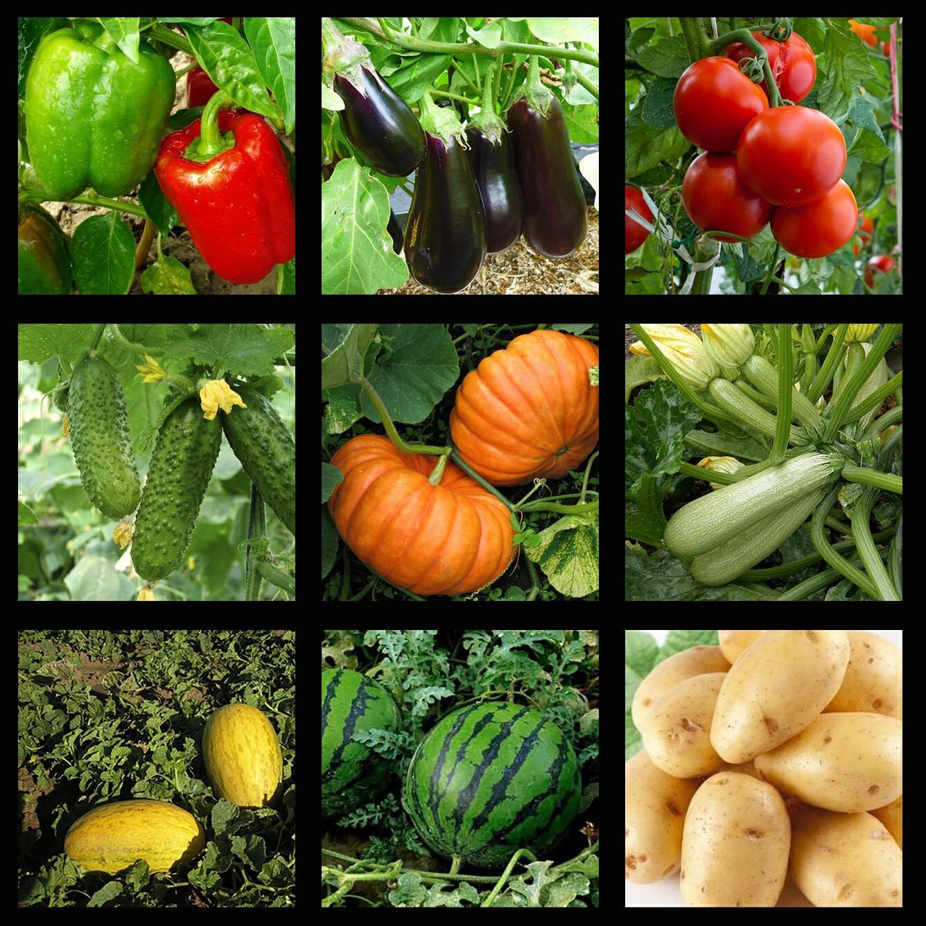 Овощи семена для посадки с картинками и описаниями