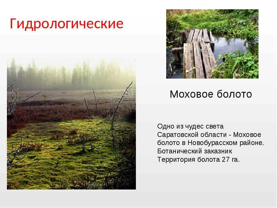 Гидрологические Одно из чудес света Саратовской области - Моховое болото в Но...