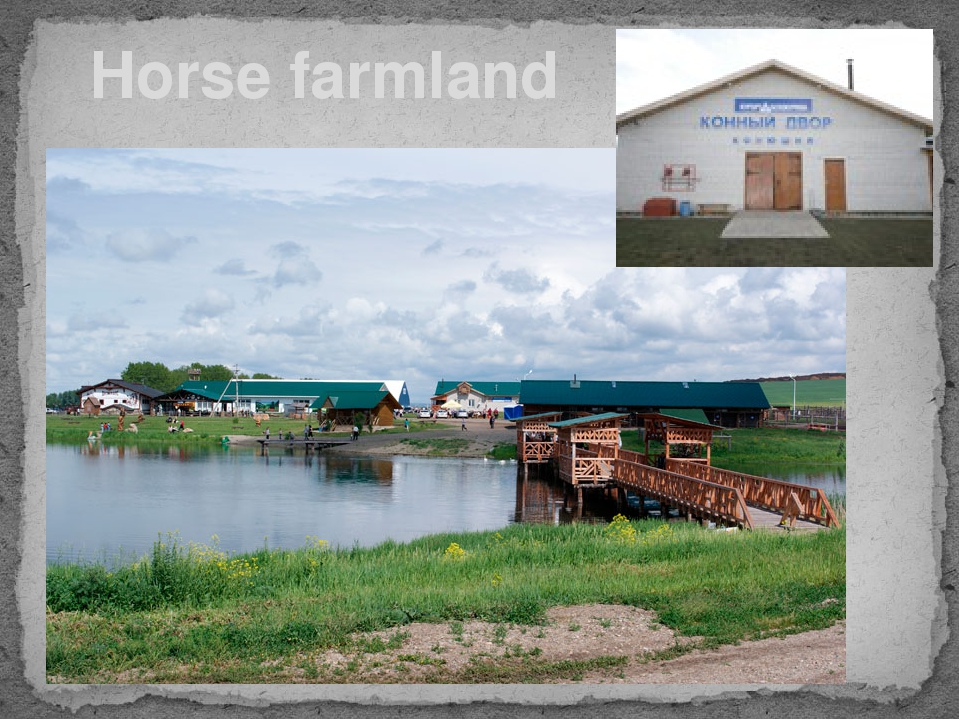 Horse farmland