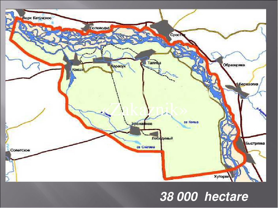 38 000 hectare «Zakaznik»