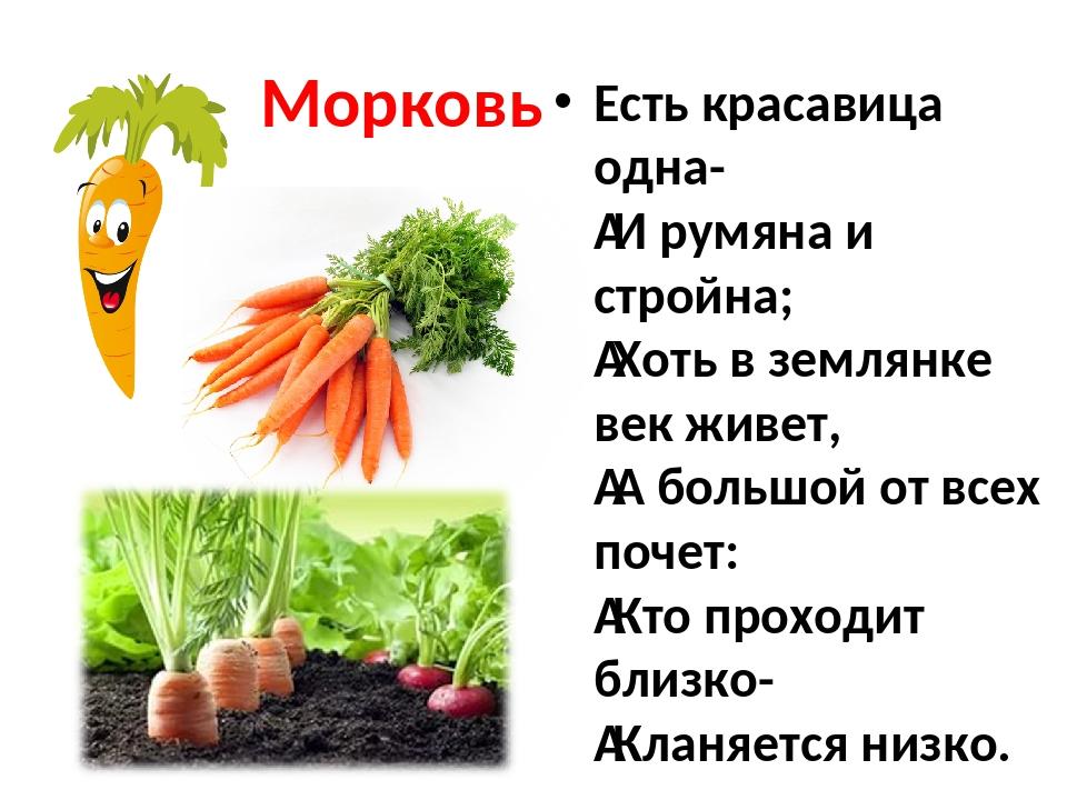 Морковь Есть красавица одна- И румяна и стройна; Хоть в землянке век живет,...