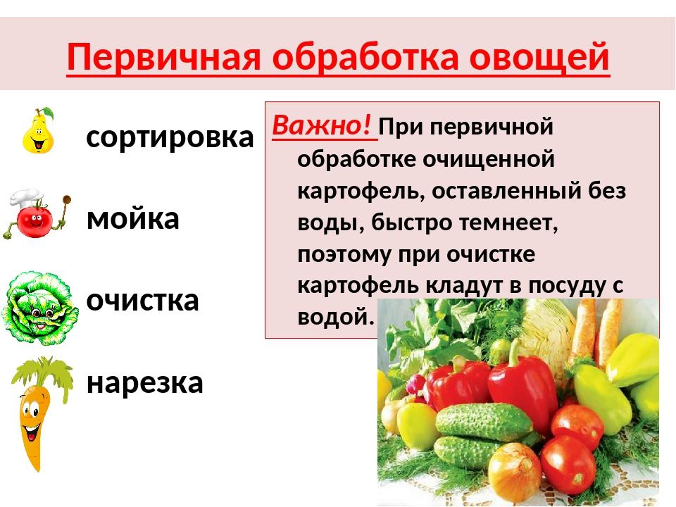 Первичная обработка овощей сортировка мойка очистка нарезка Важно! При первич...