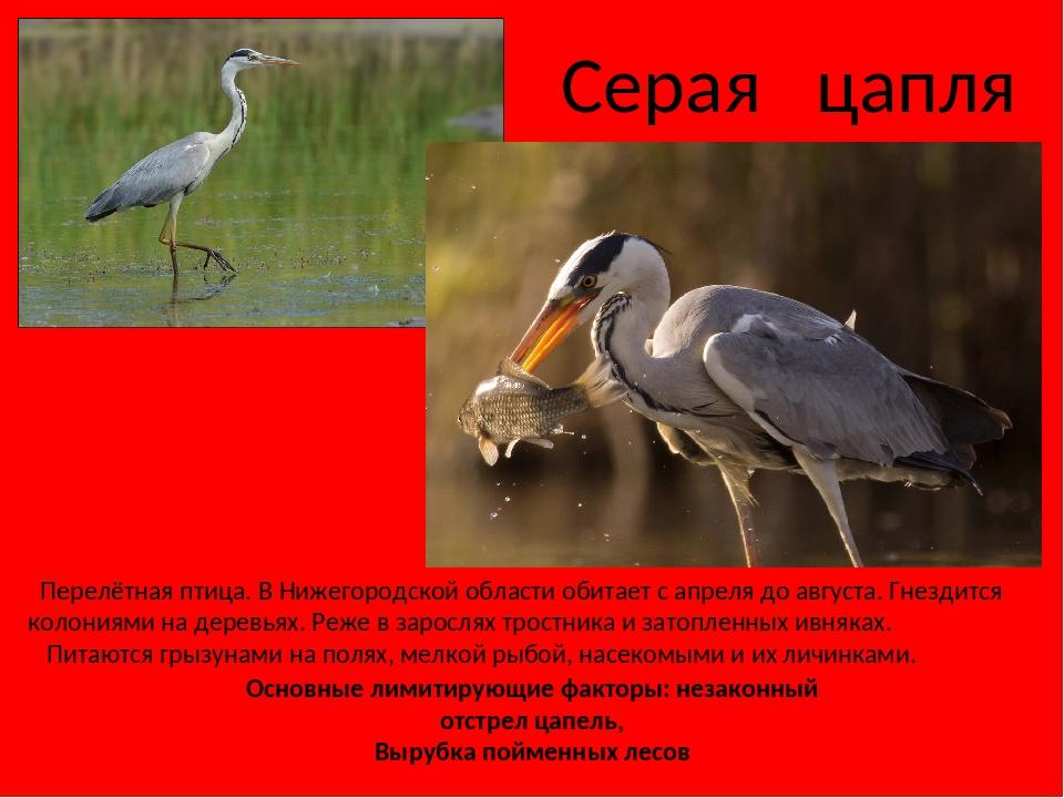 птицы нижегородской области занесенные в красную книгу площадке партнершей мужская