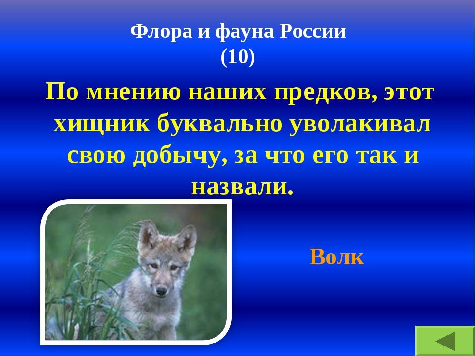 Флора и фауна России (10) По мнению наших предков, этот хищник буквально увол...