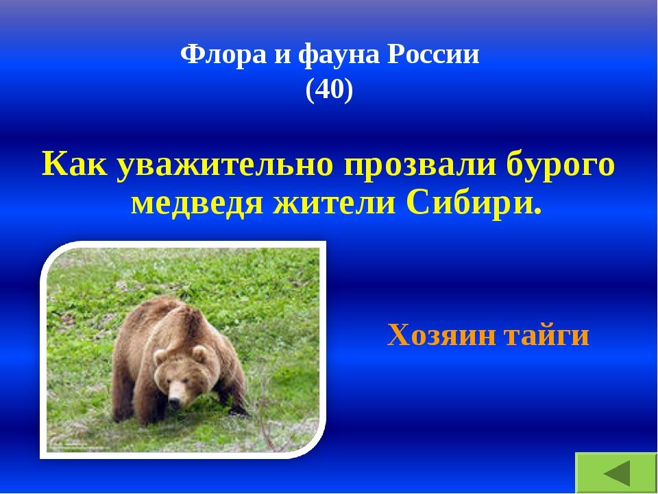 Флора и фауна России (40) Как уважительно прозвали бурого медведя жители Сиби...