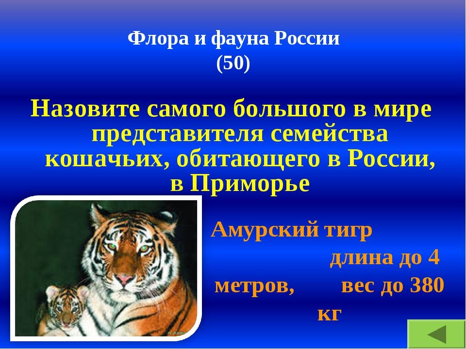 Флора и фауна России (50) Назовите самого большого в мире представителя семей...