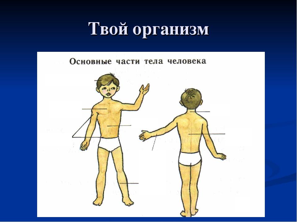 Твой организм