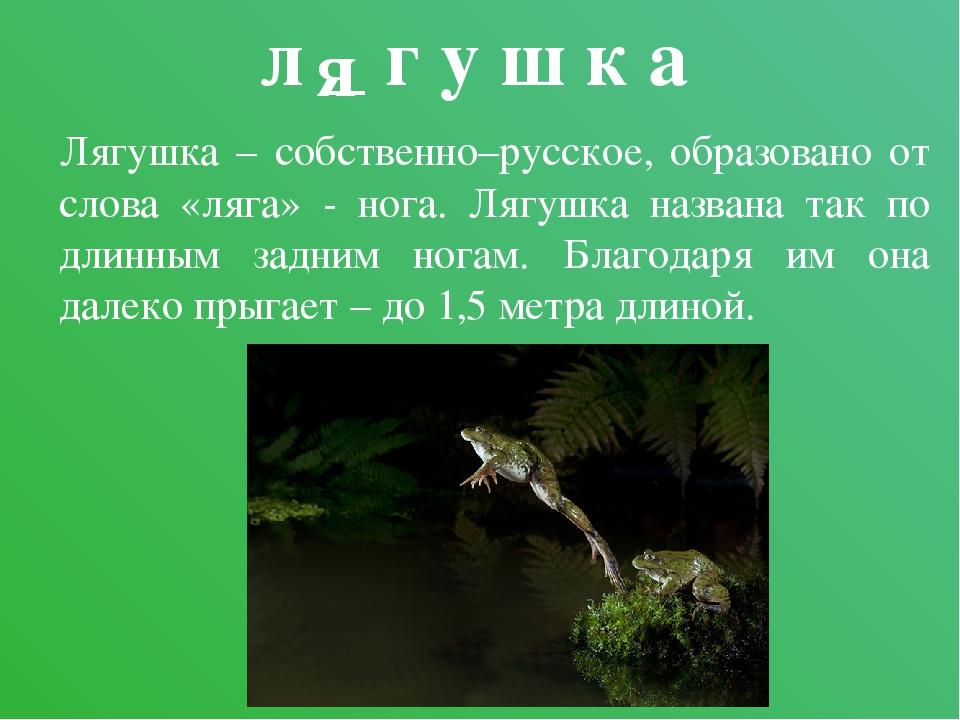 л _ г у ш к а Лягушка – собственно–русское, образовано от слова «ляга» - нога...