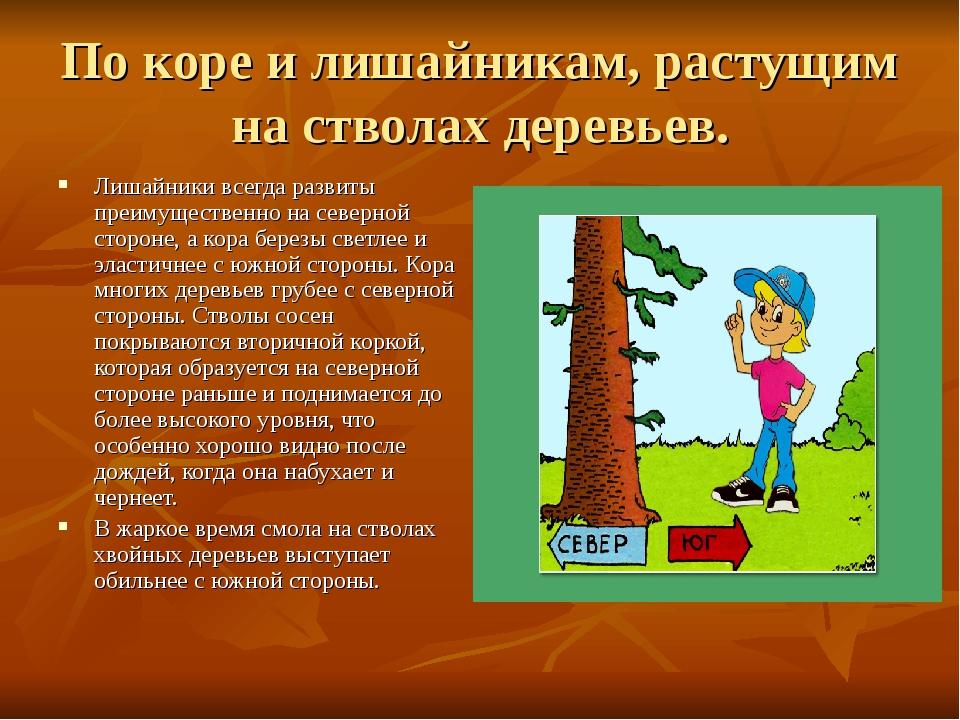 По коре и лишайникам, растущим на стволах деревьев. Лишайники всегда развиты...