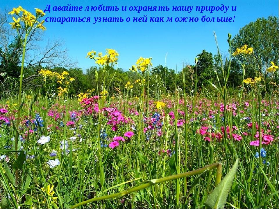 Давайте любить и охранять нашу природу и стараться узнать о ней как можно бол...