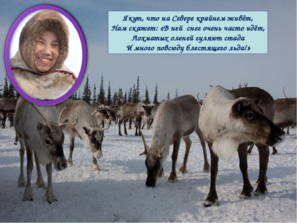 Якут, что на Севере крайнем живёт, Нам скажет: «В ней снег очень часто идёт,...