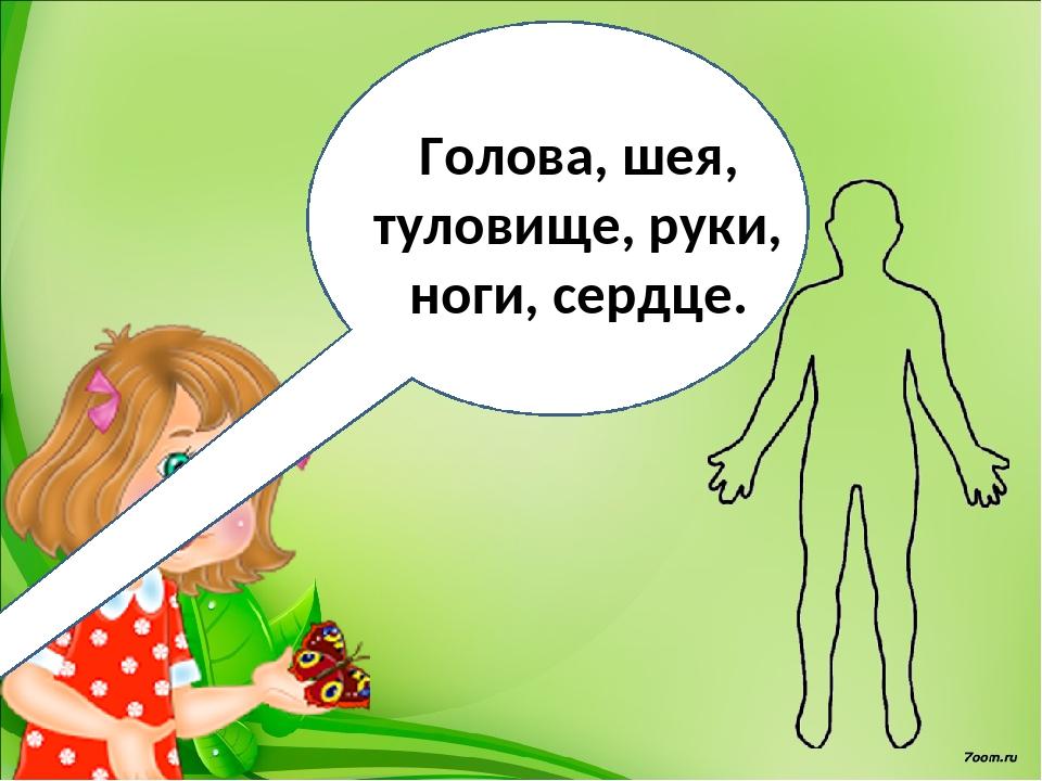 Голова, шея, туловище, руки, ноги, сердце.
