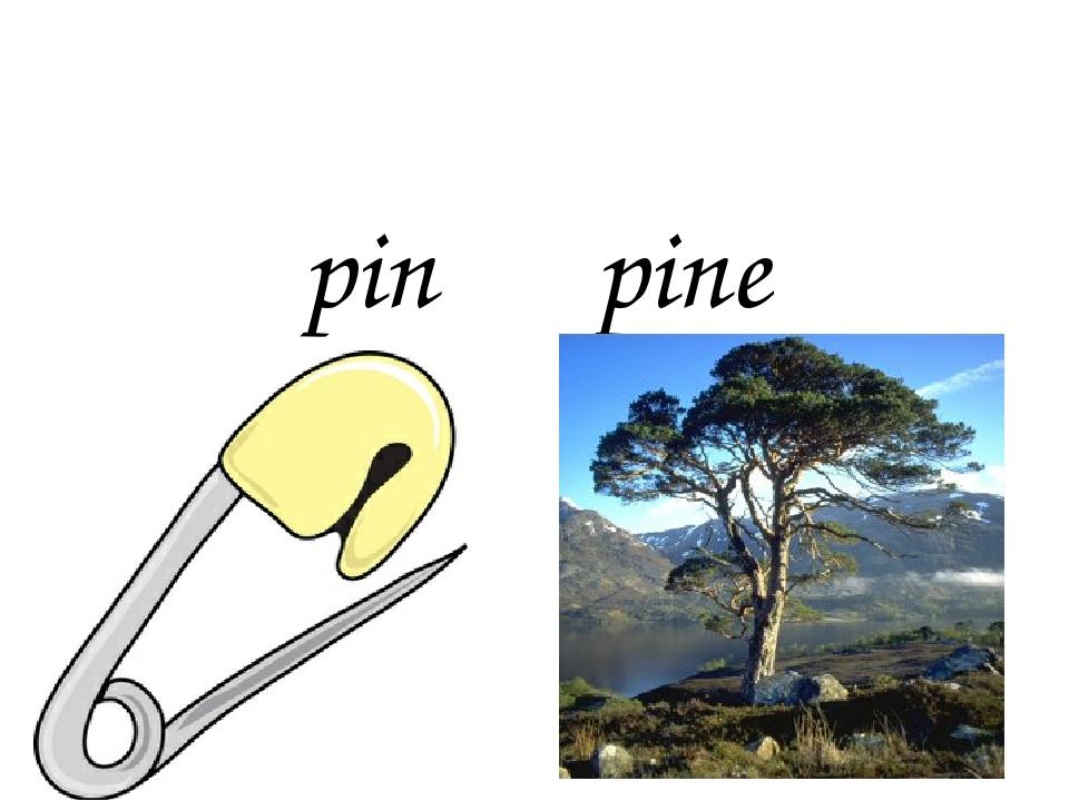 pin pine