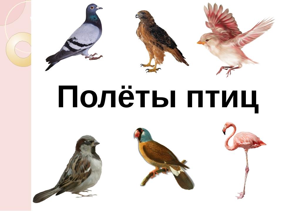 Полёты птиц