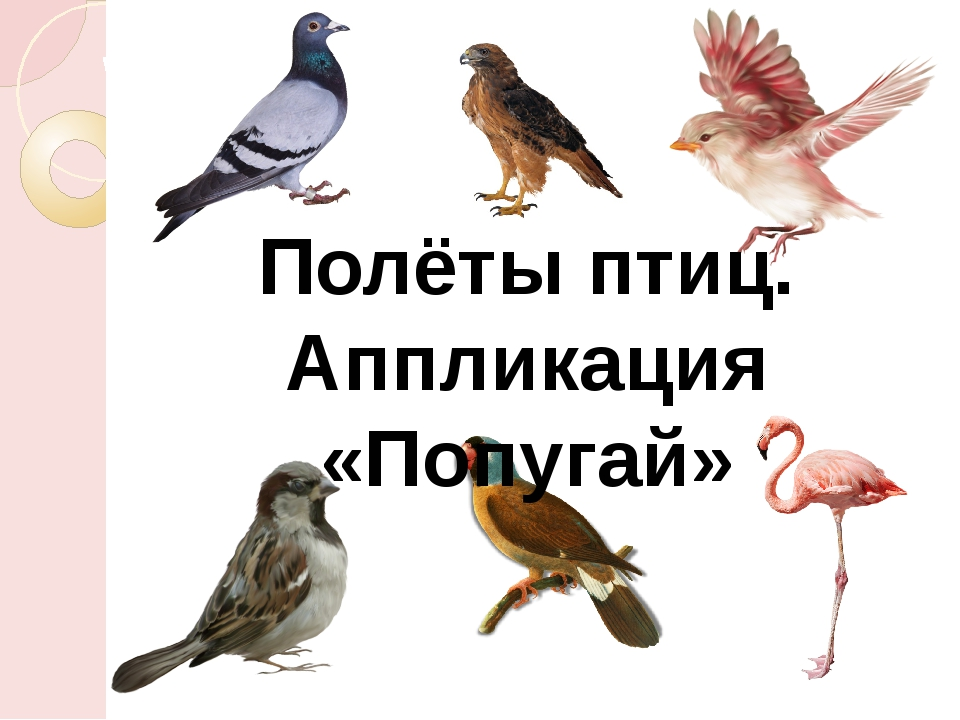 Полёты птиц. Аппликация «Попугай»