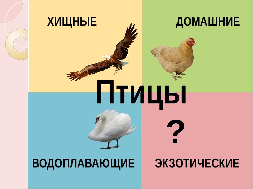 Птицы ВОДОПЛАВАЮЩИЕ ЭКЗОТИЧЕСКИЕ ХИЩНЫЕ ДОМАШНИЕ ?