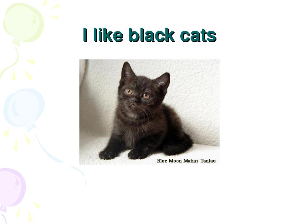 I like black cats