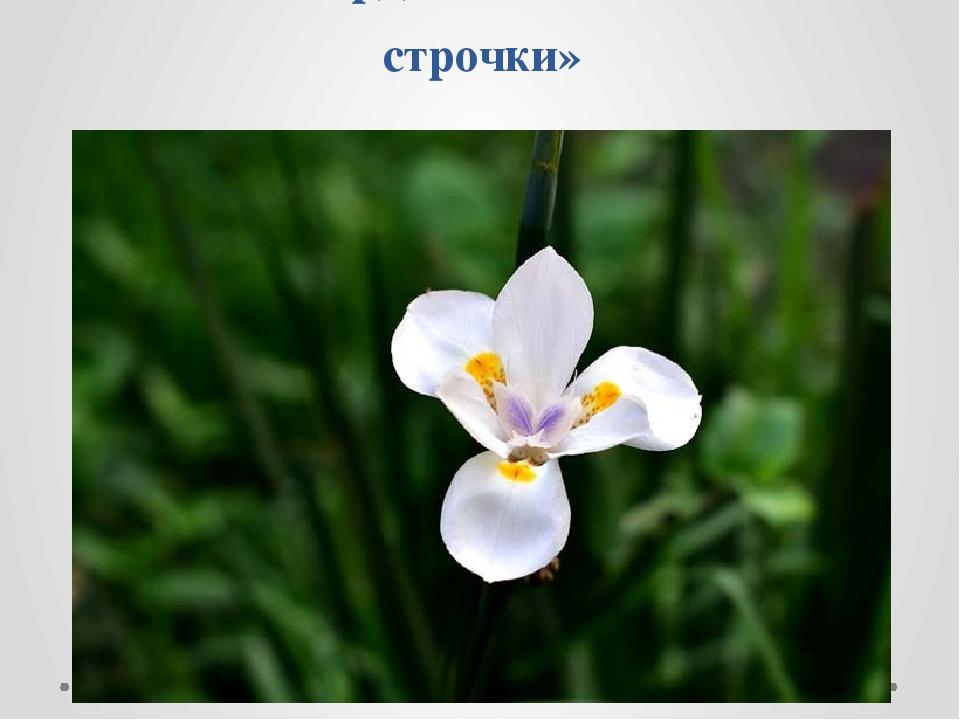 А.Т.Твардовский «Весенние строчки»