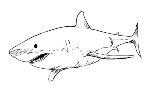 белая акула картинки для раскрашивания первую очередь