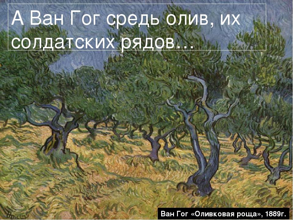 А Ван Гог средь олив, их солдатских рядов… Ван Гог «Оливковая роща», 1889г.