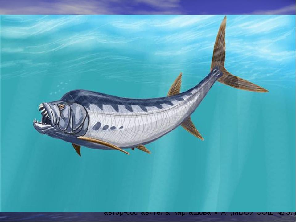 xiphactinus fish - 900×600