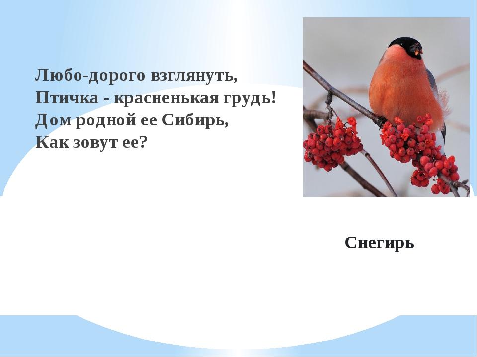 Снегирь Любо-дорого взглянуть, Птичка - красненькая грудь! Дом родной ее Сиби...