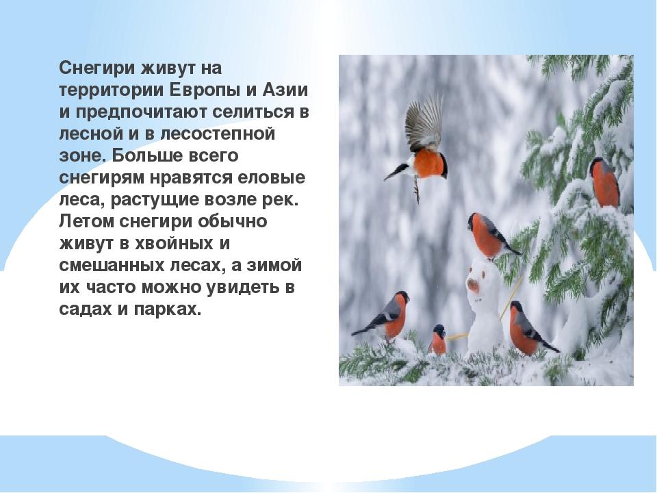Снегири живут на территории Европы и Азии и предпочитают селиться в лесной и...