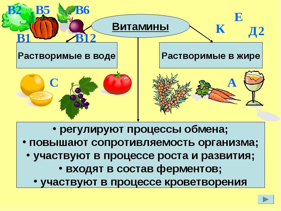 Витамины регулируют процессы обмена; повышают сопротивляемость организма; уча...