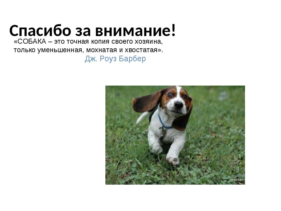 картинка собаки спасибо за внимание бездыханное тело пара