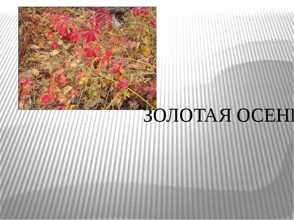 ЗОЛОТАЯ ОСЕНЬ Поздняя осень.