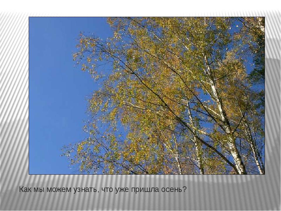 Как мы можем узнать, что уже пришла осень?