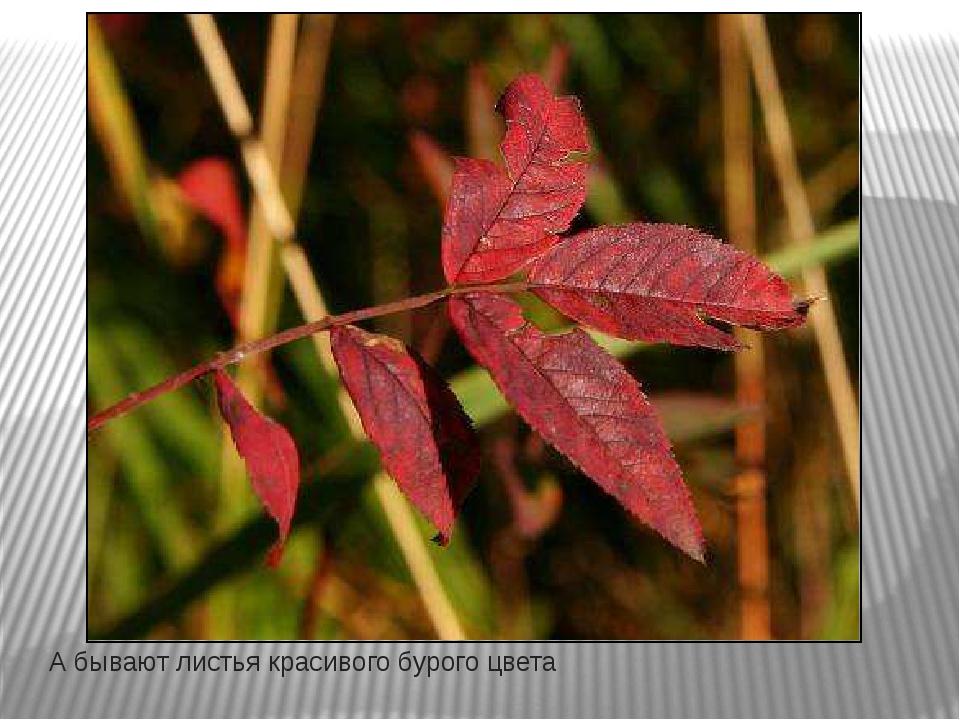 А бывают листья красивого бурого цвета