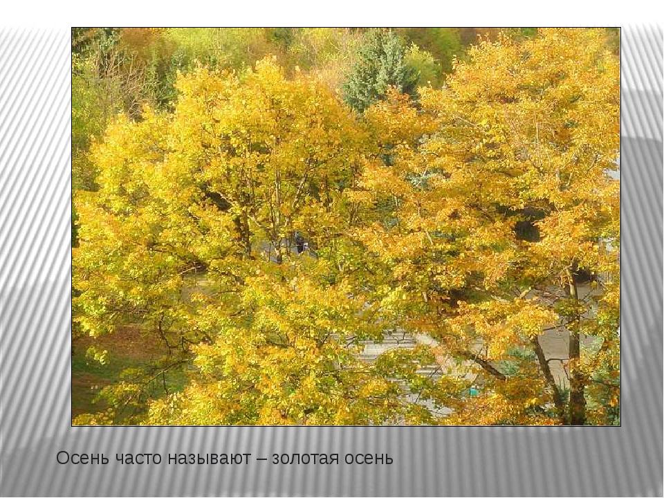 Осень часто называют – золотая осень