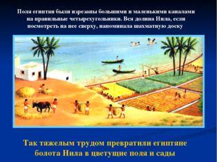 Так тяжелым трудом превратили египтяне болота Нила в цветущие поля и сады Пол