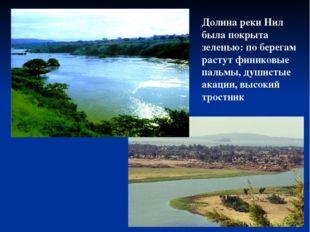 Долина реки Нил была покрыта зеленью: по берегам растут финиковые пальмы, душ