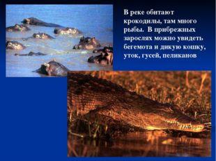 В реке обитают крокодилы, там много рыбы. В прибрежных зарослях можно увидеть