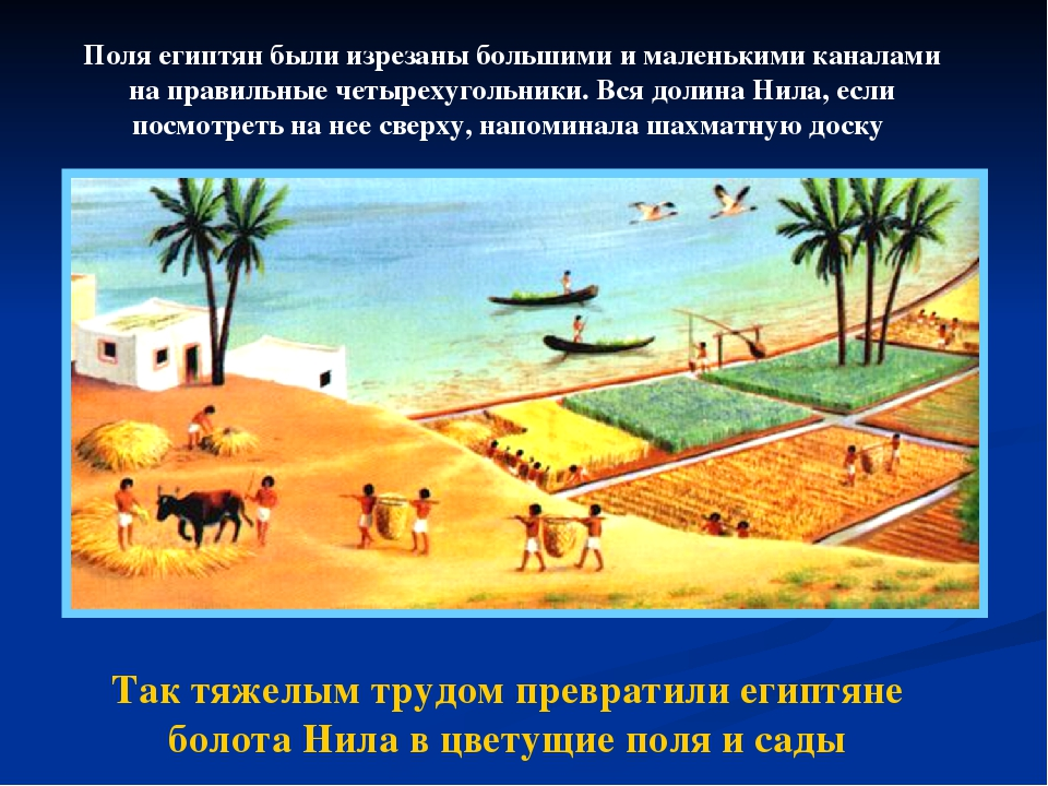 Так тяжелым трудом превратили египтяне болота Нила в цветущие поля и сады Пол...