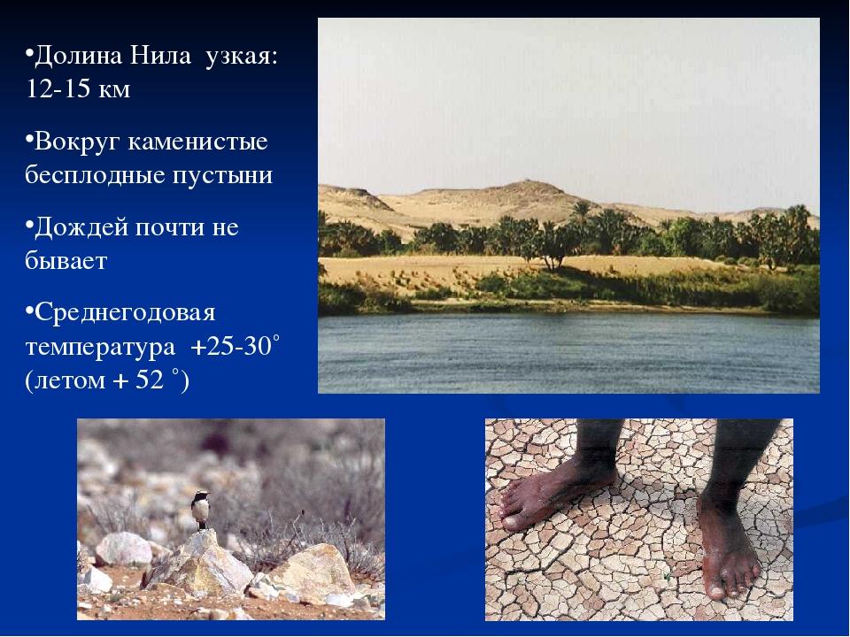 Долина Нила узкая: 12-15 км Вокруг каменистые бесплодные пустыни Дождей почти...