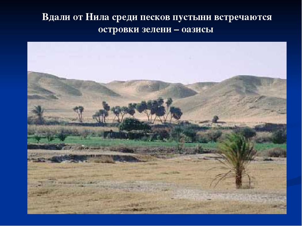 Вдали от Нила среди песков пустыни встречаются островки зелени – оазисы