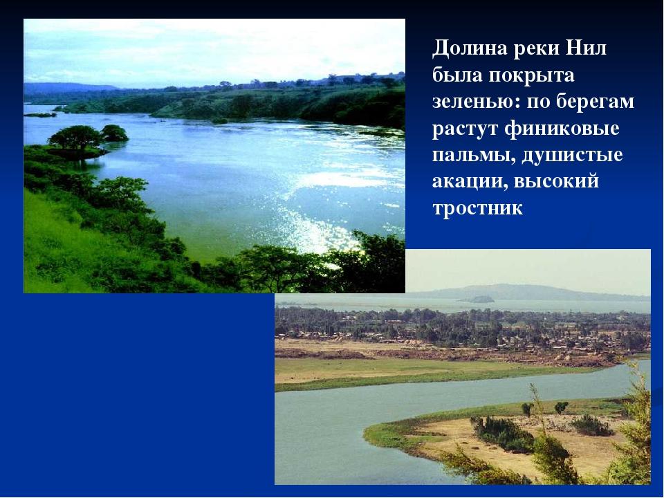 Долина реки Нил была покрыта зеленью: по берегам растут финиковые пальмы, душ...
