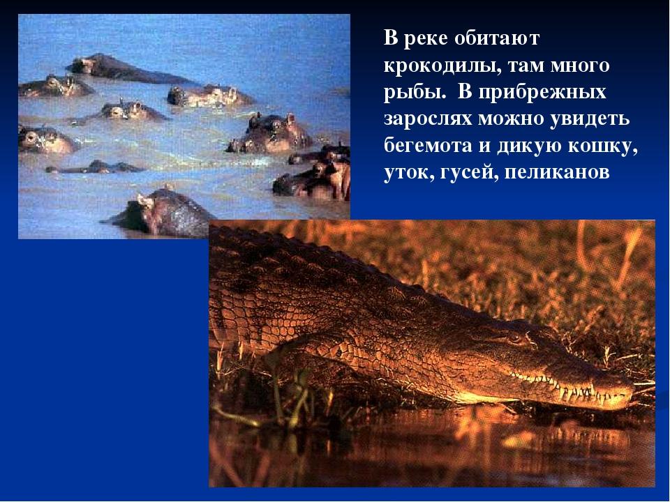 В реке обитают крокодилы, там много рыбы. В прибрежных зарослях можно увидеть...