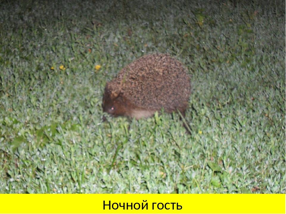 Ночной гость