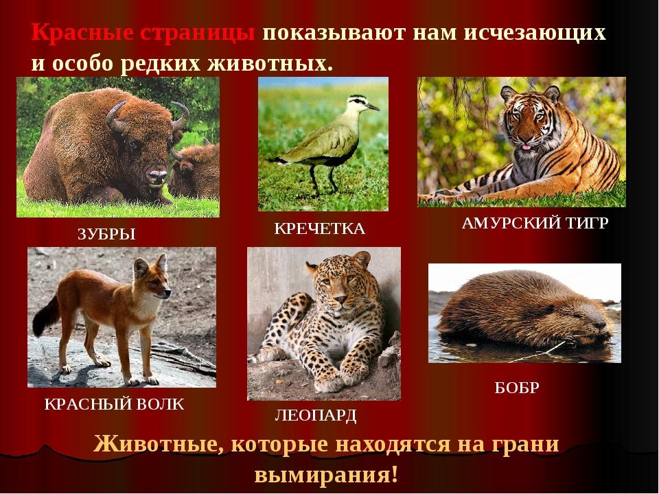 Картинки животных из красной книги с названиями
