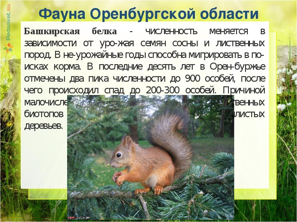 Животные оренбургской области фото и описание доклад