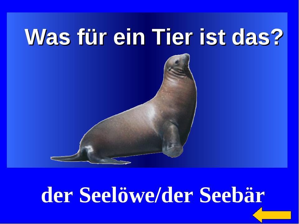 Was für ein Tier ist das? der Seelöwe/der Seebär