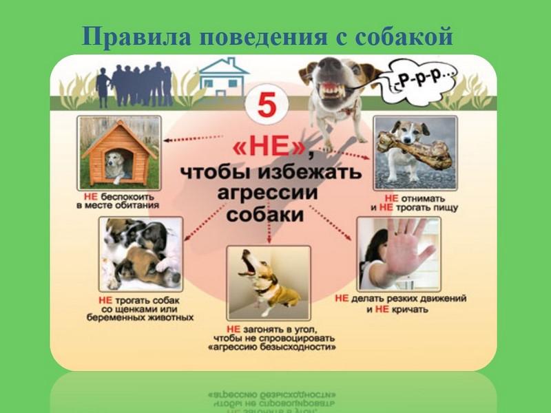 Картинки правила поведения с бездомными животными