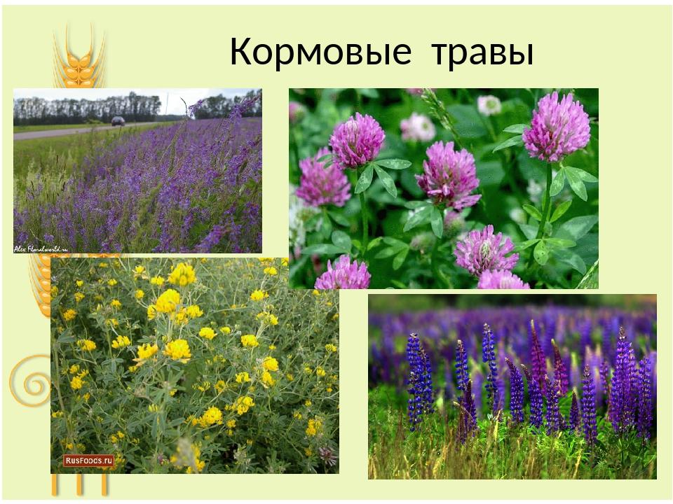 кормовые растения названия и фото мини платья кроссовками